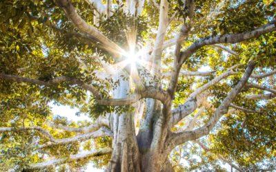 Příroda – náš jediný domov